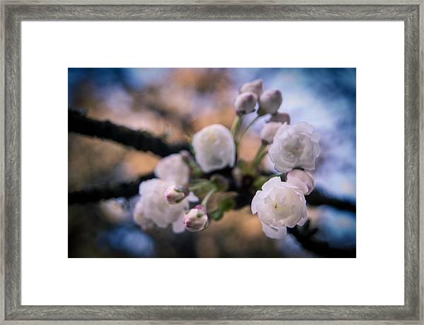 Fruitful Beginnings Framed Print