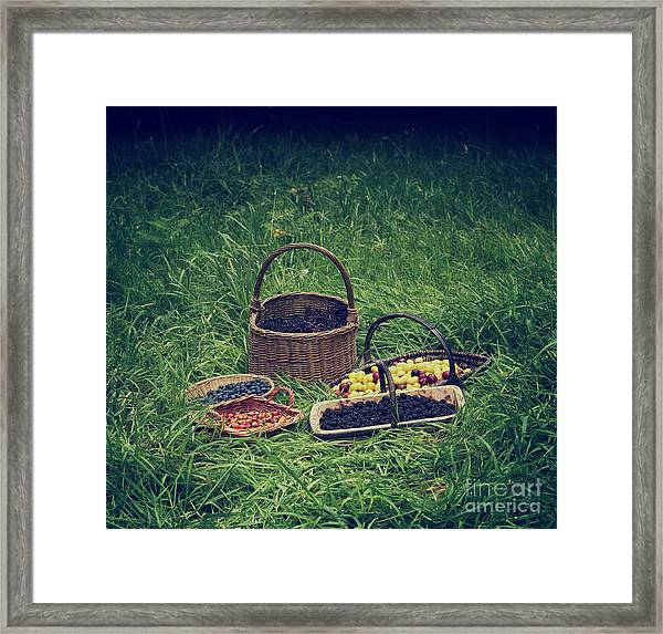 Fruits Of The Hedgerow Framed Print by Tim Gainey