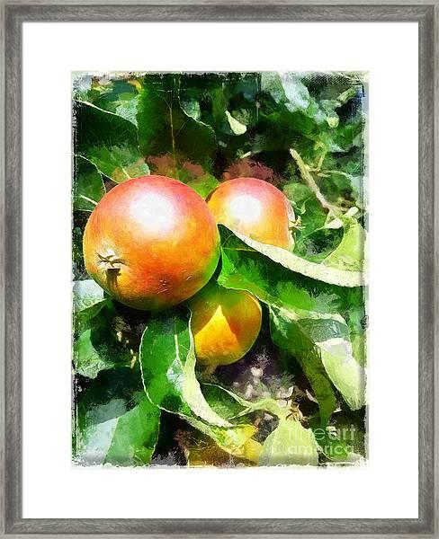 Fugly Manor Apples Framed Print