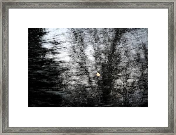 Full Moon Behind Trees Framed Print by Carolyn Reinhart