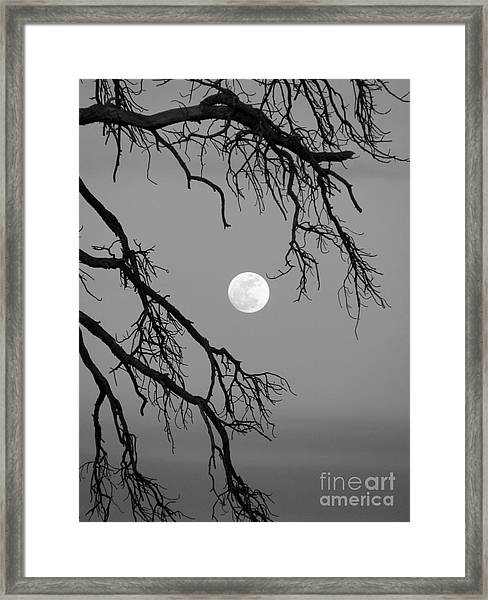 Full Moon Old Snag Framed Print