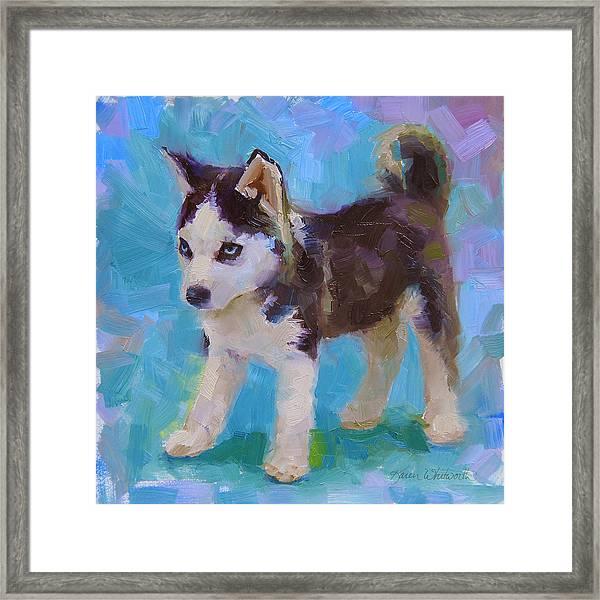 Alaskan Husky Sled Dog Puppy Framed Print