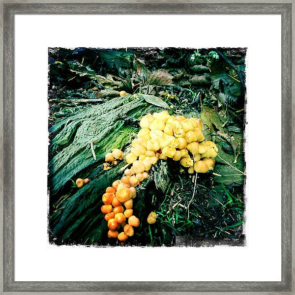 Fungus Among Us Framed Print
