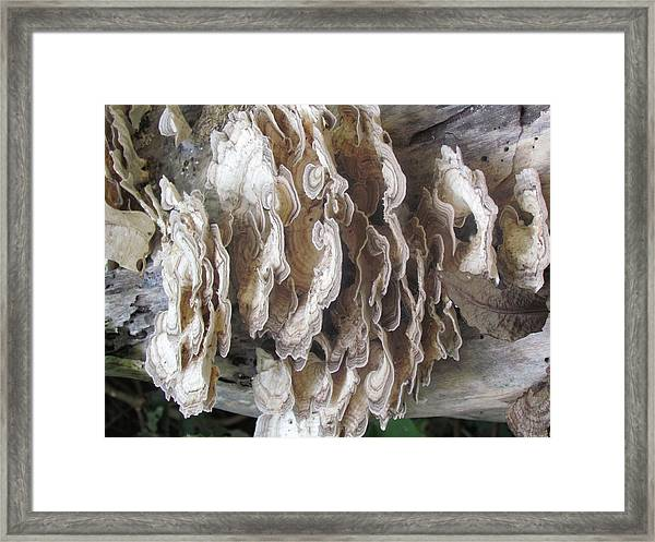 Fungus On Log Framed Print