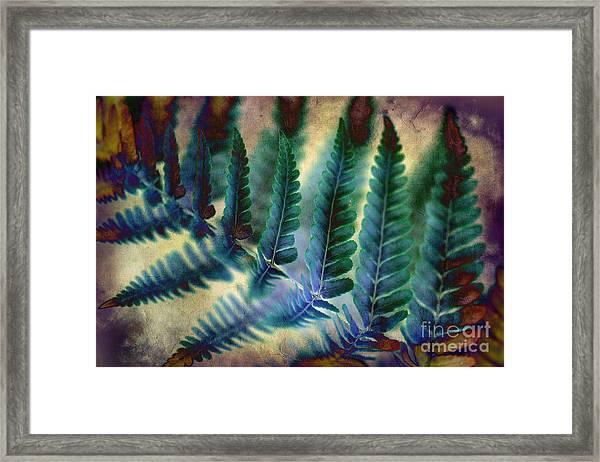 Funky Fern. Framed Print