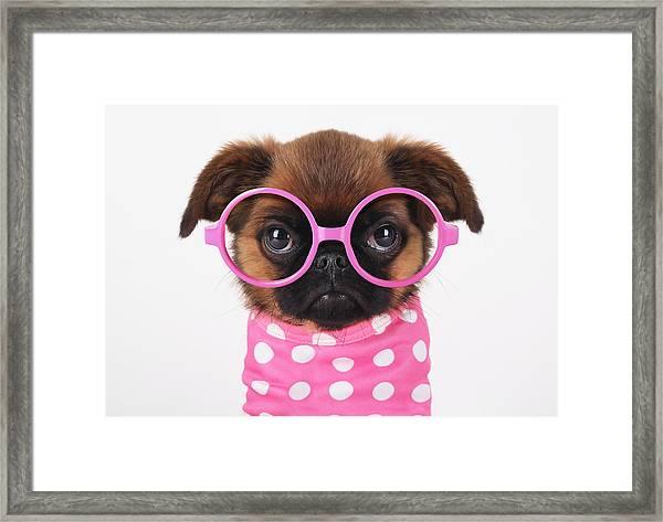 Funny Puppy Framed Print by Retales Botijero