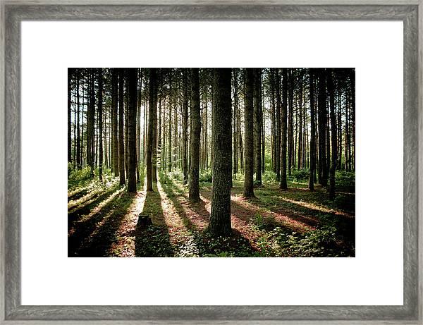 Galarneau Framed Print