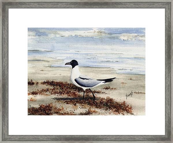 Galveston Gull Framed Print