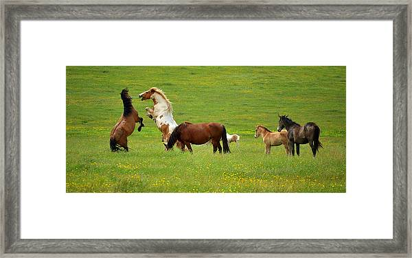 Game They Play Framed Print