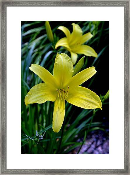 Garden Brilliance Framed Print by Larry Jones