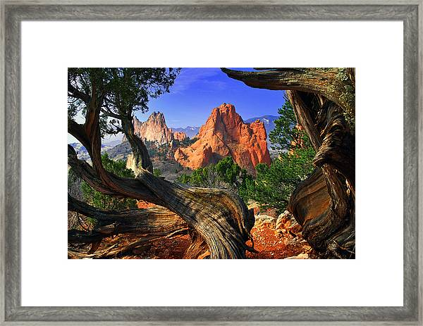 Garden Framed By Twisted Juniper Trees Framed Print