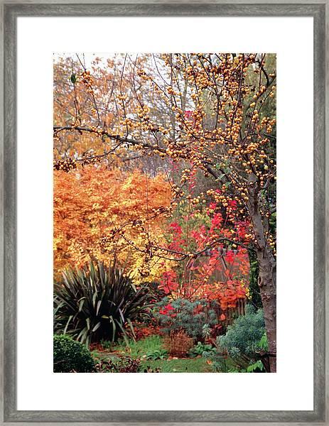 Garden In Autumn Framed Print