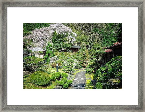 Garden Of A Japanese Ryokan With Sakura - Cherry Blossom Framed Print