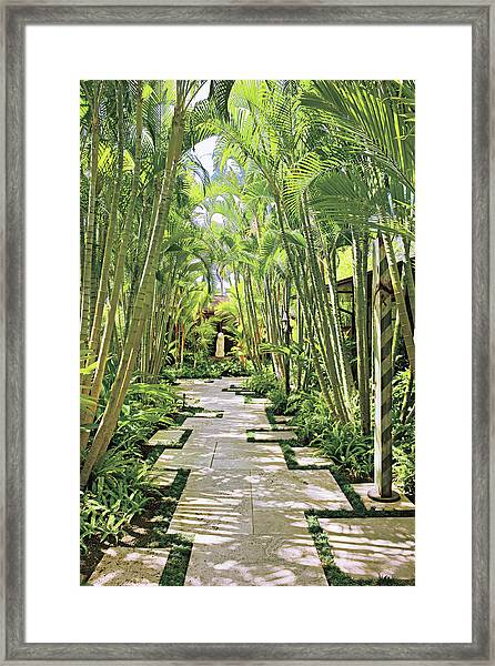 Garden Path And Palm Trees Framed Print