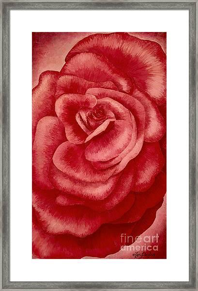 Garden Rose Framed Print
