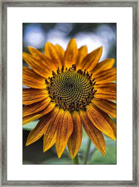 Garden Sunflower Framed Print