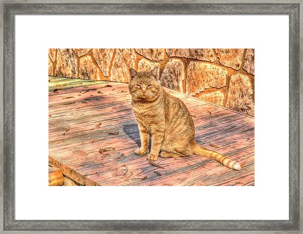 Garfield 01 Framed Print