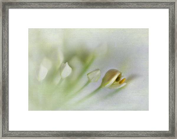 Garlic Chive Blossom Framed Print