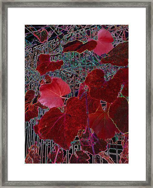 Gated Nature Framed Print