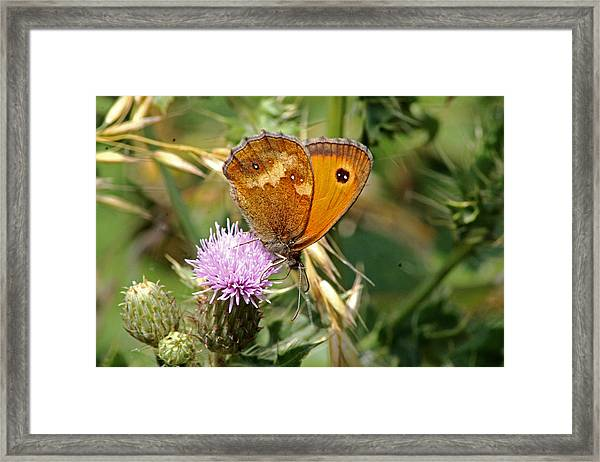 Gatekeeper Butterfly Framed Print