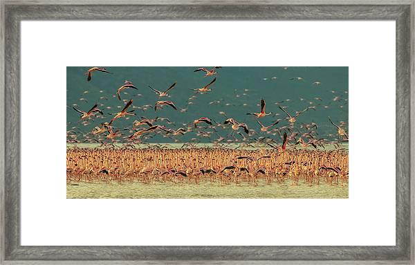 Gathering In Golden Light Framed Print by David Hua