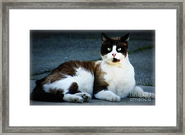 Gato Framed Print