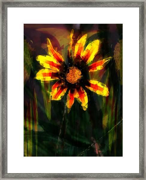 Gazania Framed Print