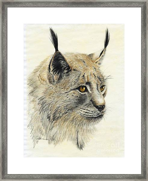 Gazing Lynx Framed Print