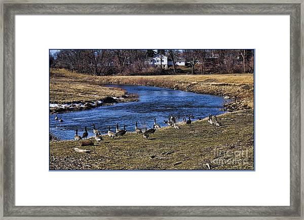 Geese On The Creek Framed Print