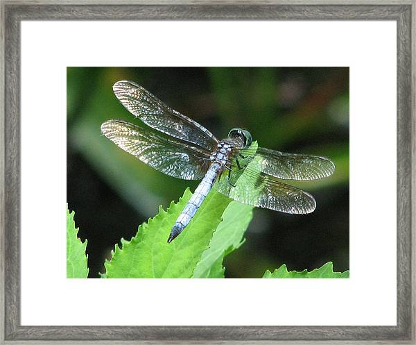 Gentle Dragon Framed Print