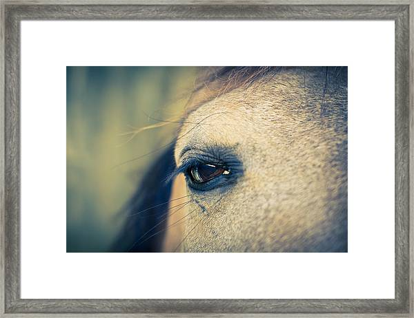 Framed Print featuring the photograph Gentle Eye by Priya Ghose