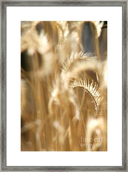 Gentle Life Framed Print