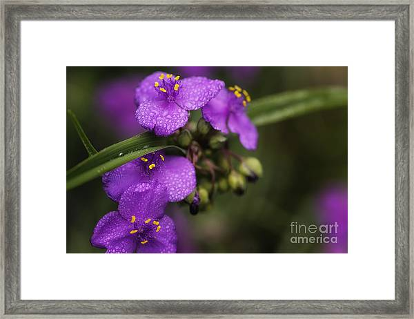Gentle Rain Framed Print