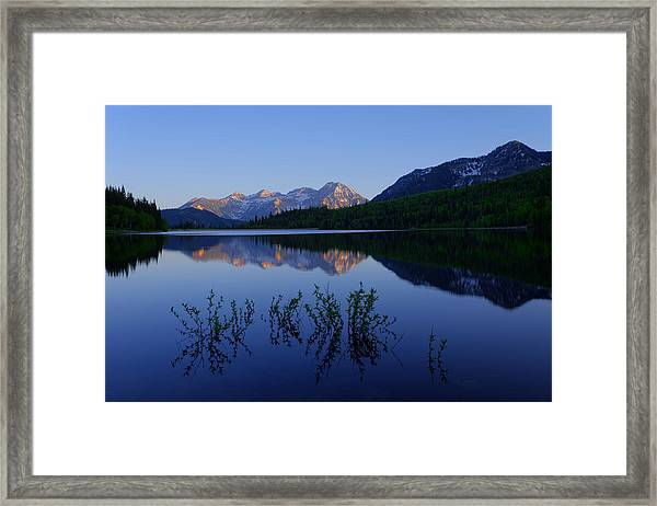 Gentle Spring Framed Print