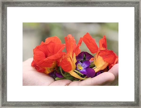 Gently Held Flowers Framed Print by Carolyn Reinhart