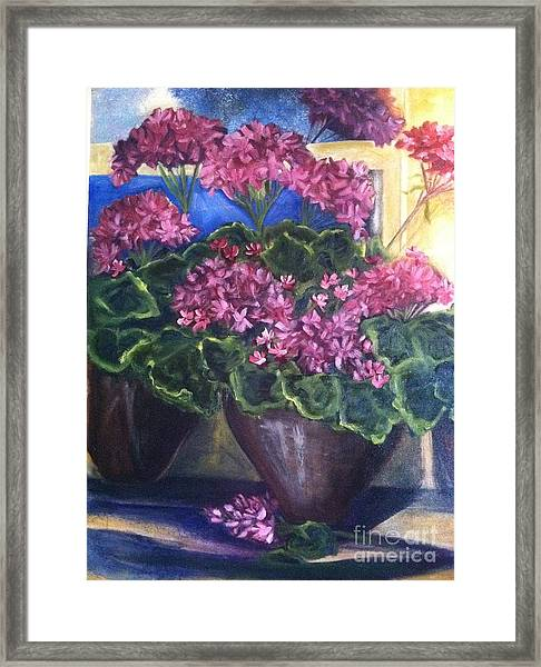 Geraniums Blooming Framed Print