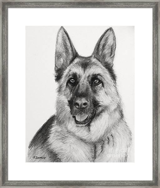 German Shepherd Drawn In Charcoal Framed Print