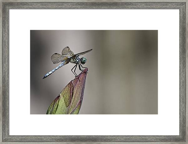 Get A Grip Framed Print