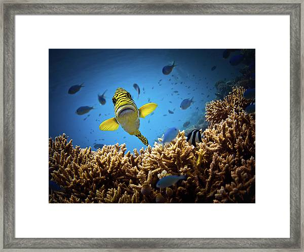 Get Out Of My Territory!!! Framed Print