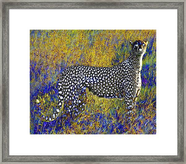 Ghost Cheetah Framed Print