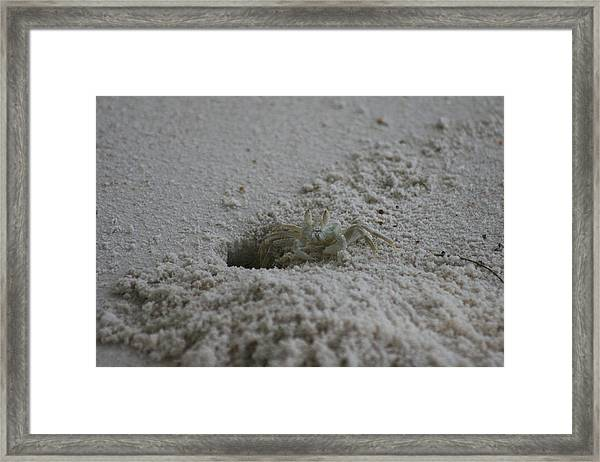 Framed Print featuring the photograph Ghost Crab by Debbie Cundy