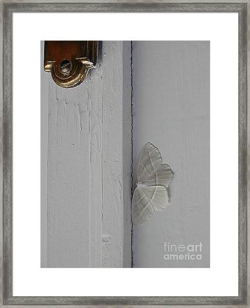 Ghost Doorbell Moth Framed Print