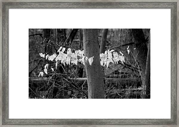 Ghost Leaves Framed Print