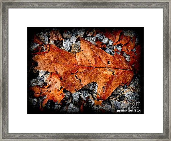 Ghost Of Summer At Blue Horse Rescue Framed Print