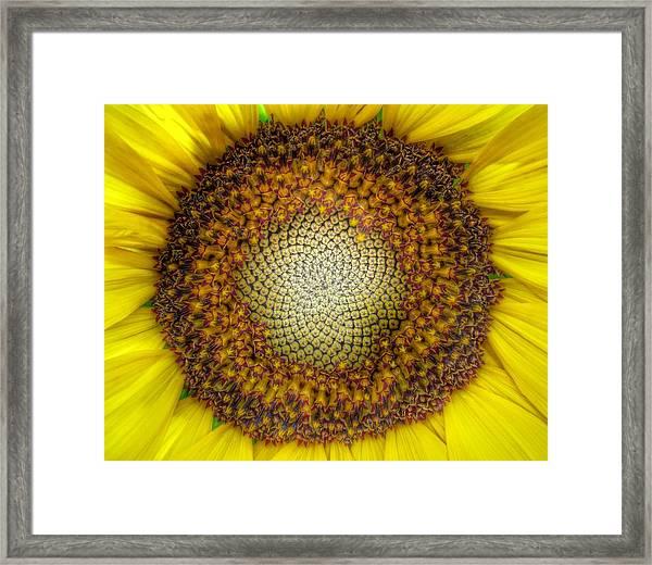 Ghost Sunflower Framed Print