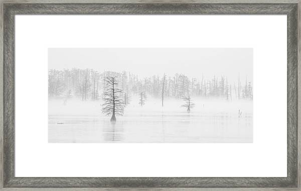 Ghost Trees II Framed Print
