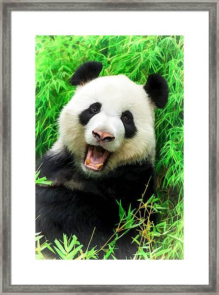 Giant Panda Laughing Framed Print