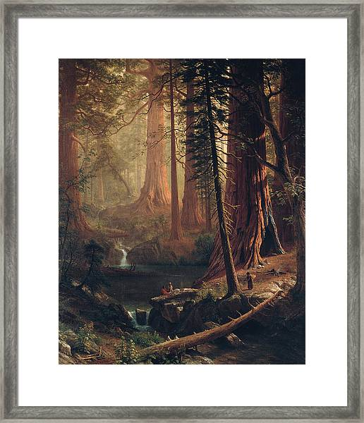 Framed Print featuring the painting Giant Redwood Trees Of California by Albert Bierstadt