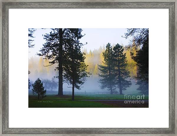 Giant Sequoias Framed Print