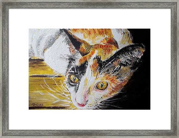 Ginger Stray Cat Framed Print